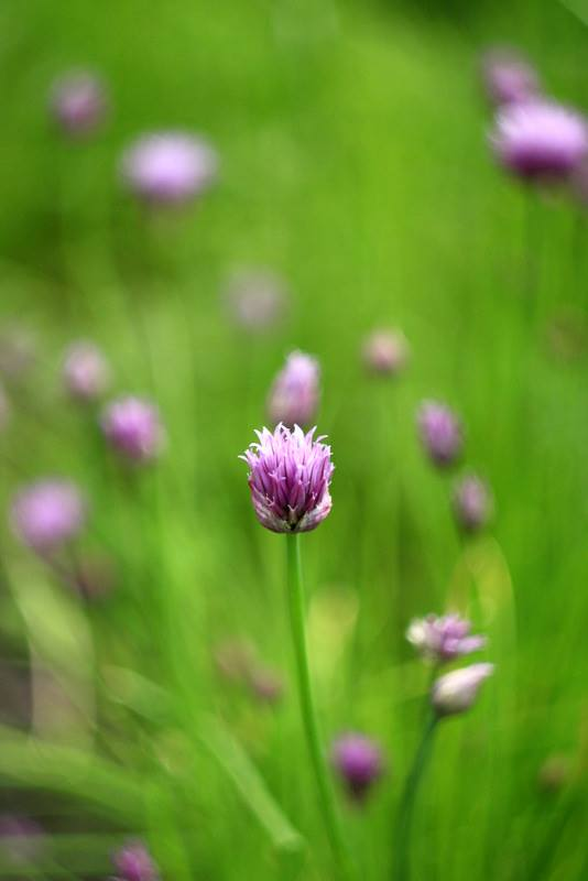 Mini kurz aromaterapie – trávicí systém
