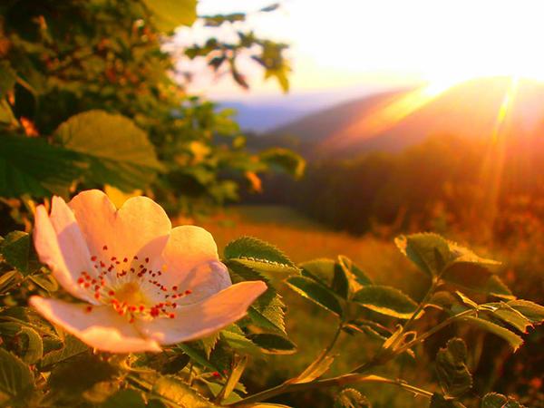 Rostliny jako osobní průvodci životem